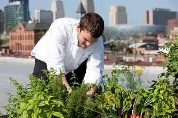 Chef gardening fresh herbs