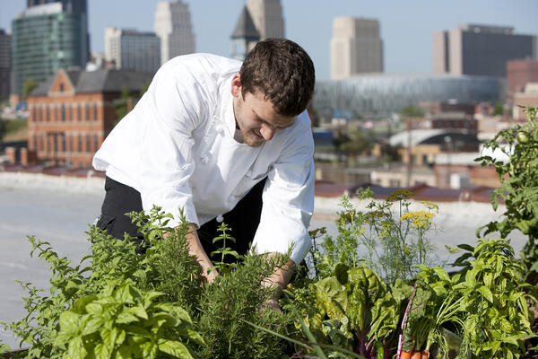 Chef gardening fresh herbs